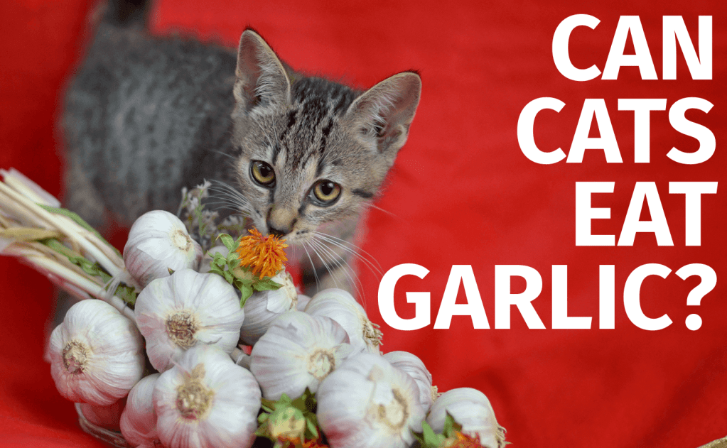 Can Cats Eat Garlic?