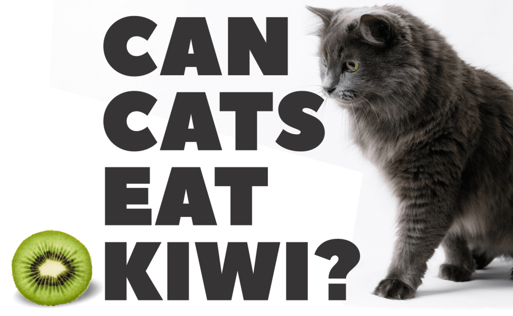 Can Cats Eat Kiwi?