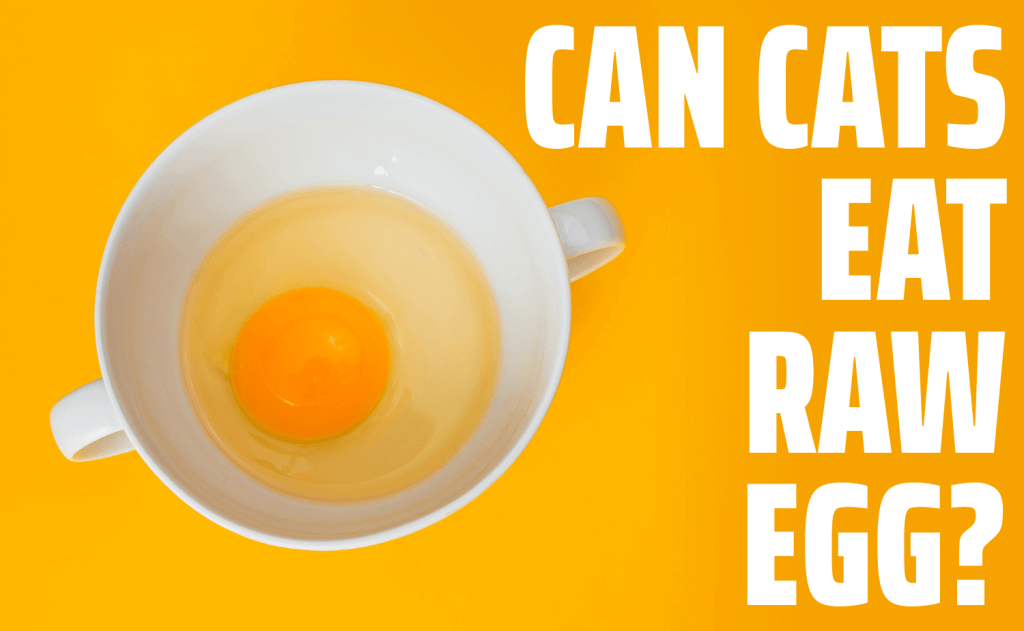 Can Cats Eat Raw Egg?