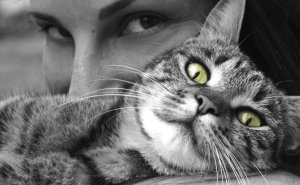 Can Cats Tell When You Are Sick?