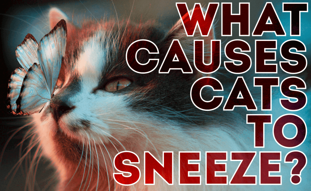 What Causes Cats to Sneeze?