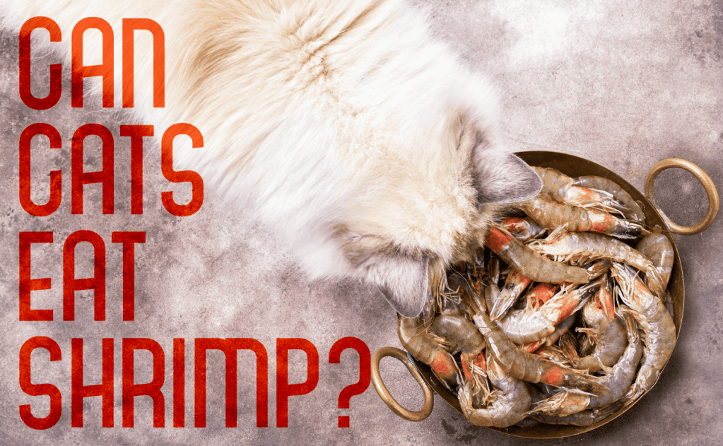 Can Cats Eat Shrimp?