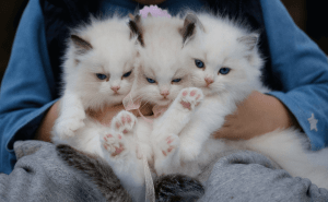 How Many Cats Are Normally in a Litter?