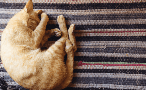 Why Do Cats Twitch In Their Sleep