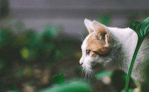 Can Cats Eat Moths?