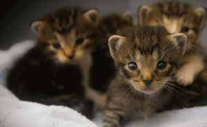 When Do Feral Cats Leave Their Kittens