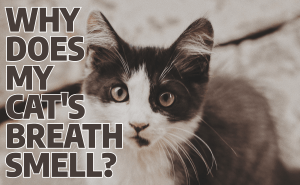 Why Does My Cat's Breath Smell?
