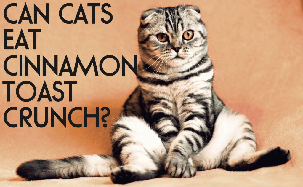Can Cats Eat Cinnamon Toast Crunch?