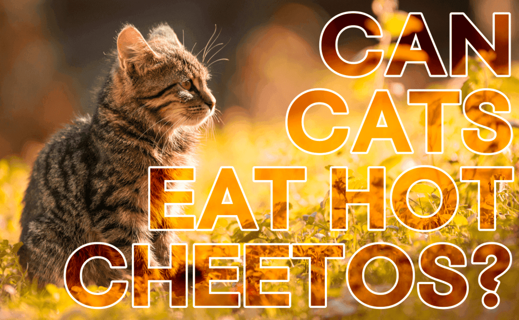 Can Cats Eat Hot Cheetos?