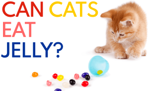 Can Cats Eat Jelly?