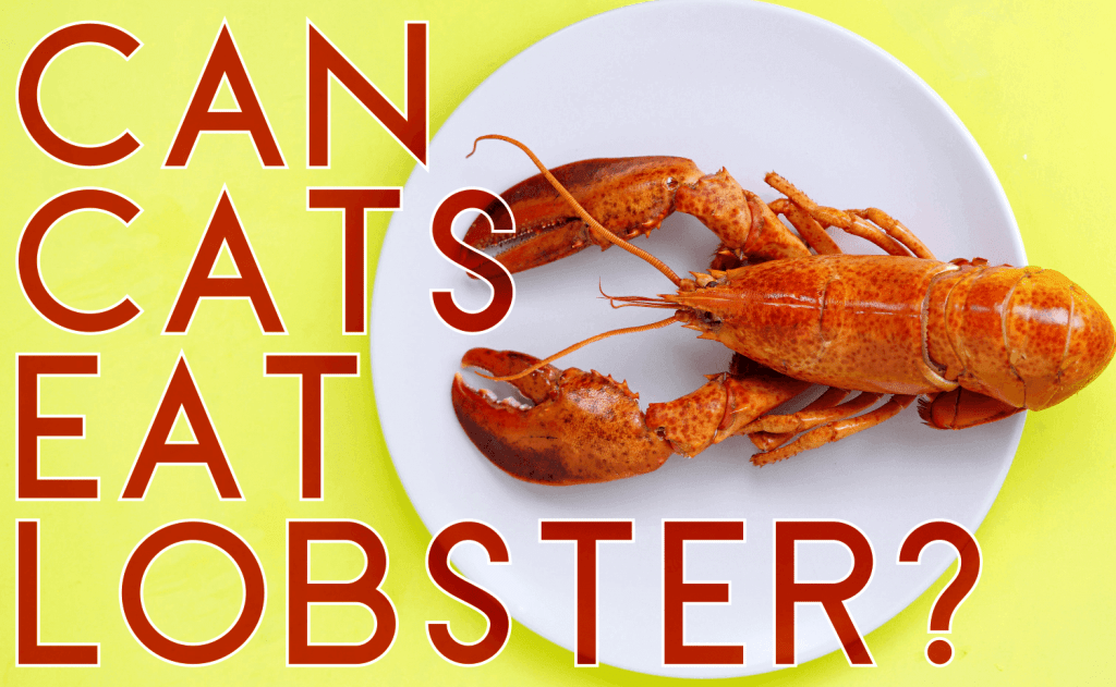 Can Cats Eat Lobster?