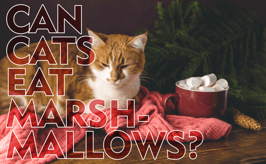 Can Cats Eat Marshmallows?