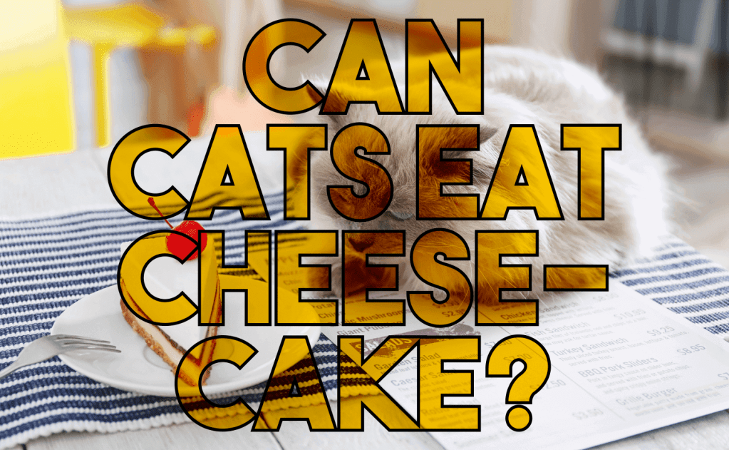 Can Cats Eat Cheesecake?