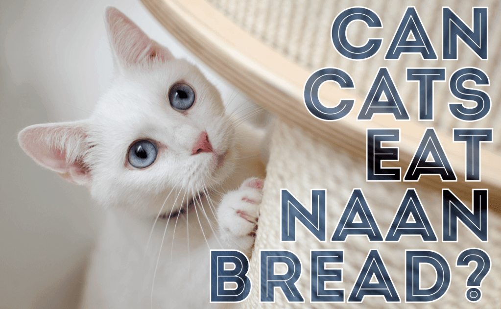 Can Cats Eat Naan Bread?
