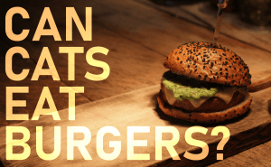 Can Cats Eat Burgers?