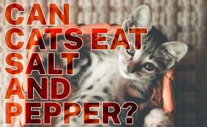 Can Cats Eat Salt and Pepper?