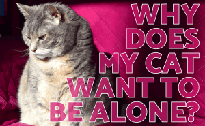 My Cat Wants to Be Alone All of a Sudden. Why Is That?