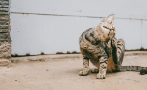 Cat Behaviors To Worry About