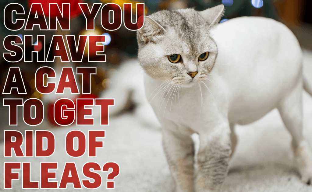Can You Shave a Cat To Get Rid of Fleas?