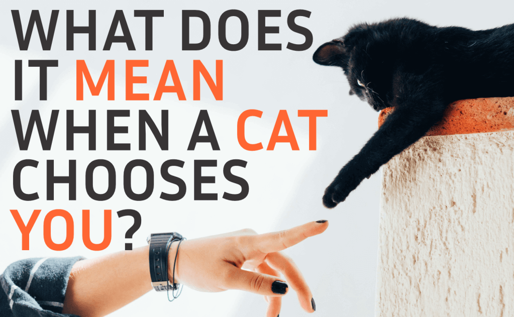 What Does It Mean When a Cat Chooses You?