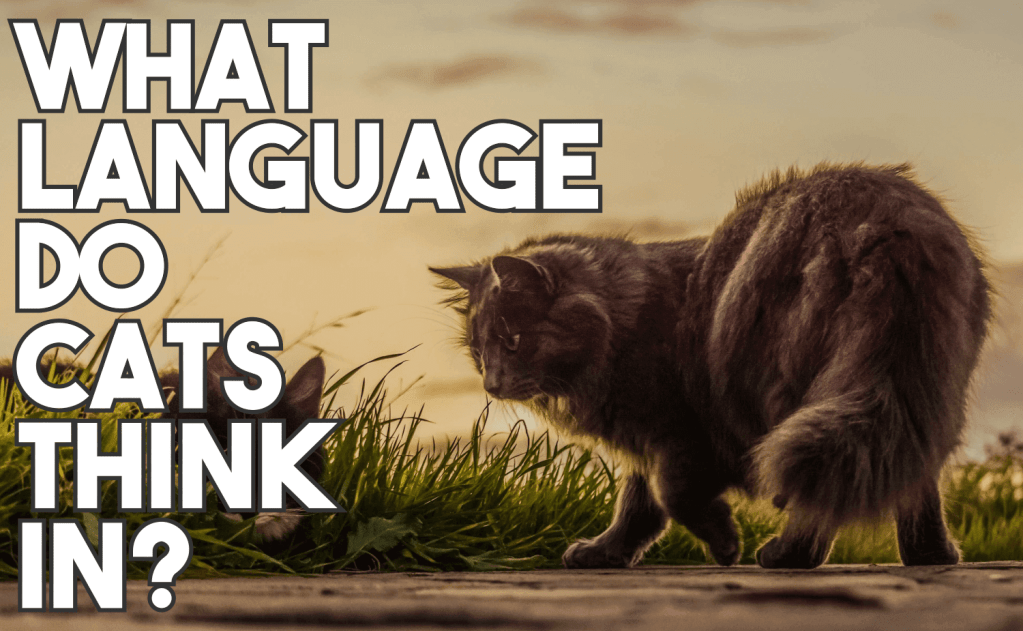 What Language Do Cats Think In?