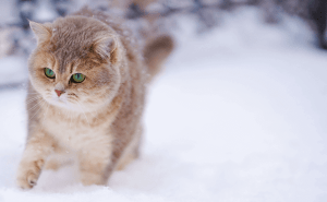 What Temperature Do Cats Get Cold At?