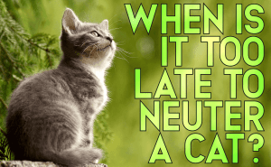 When Is It Too Late To Neuter a Cat?