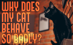 Why Is My Cat So Badly Behaved?