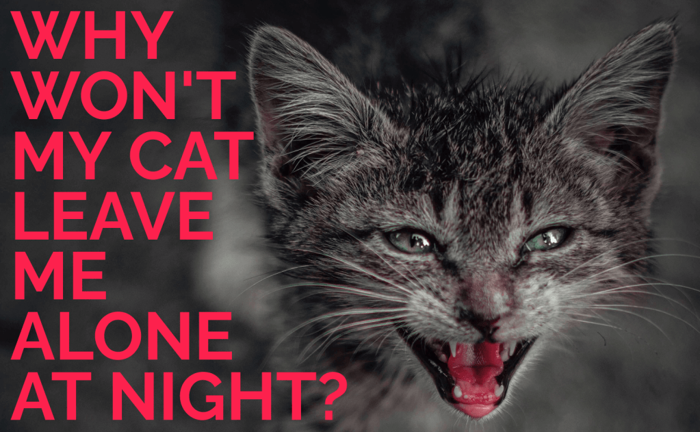 Why Won't My Cat Leave Me Alone at Night?