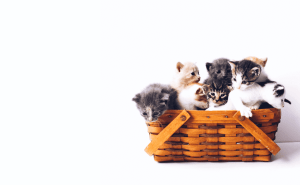 Can Kittens Live in a Garage?