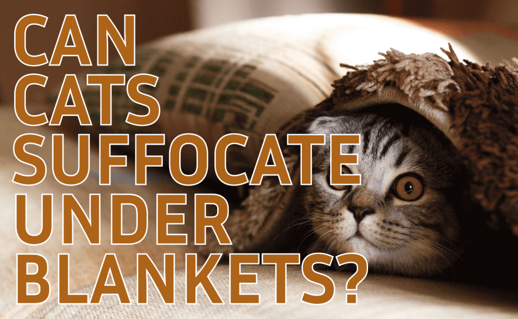Can Cats Suffocate Under Blankets