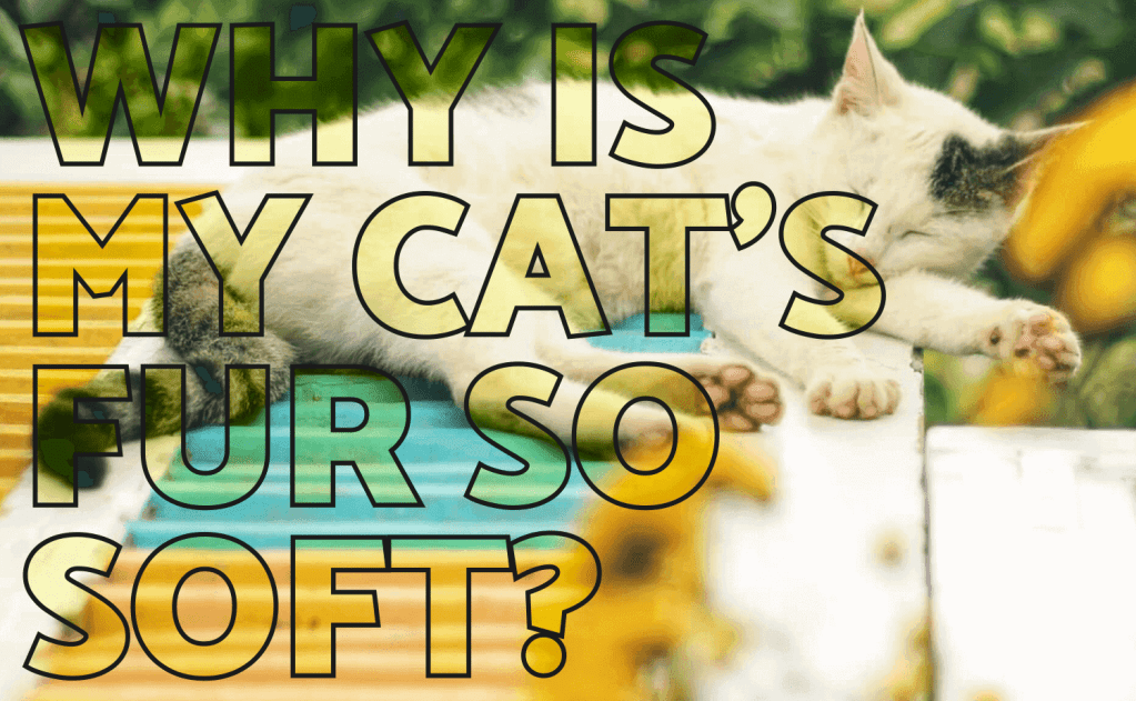 Why Is My Cat's Fur So Soft?