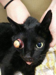 causus oogbolprolaps