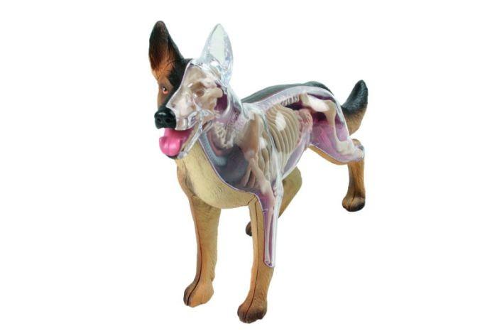 pancreas bij honden