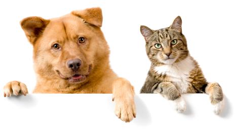 Causus uitleg hond kat