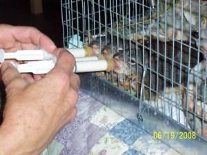 feeding-baby-squirrels