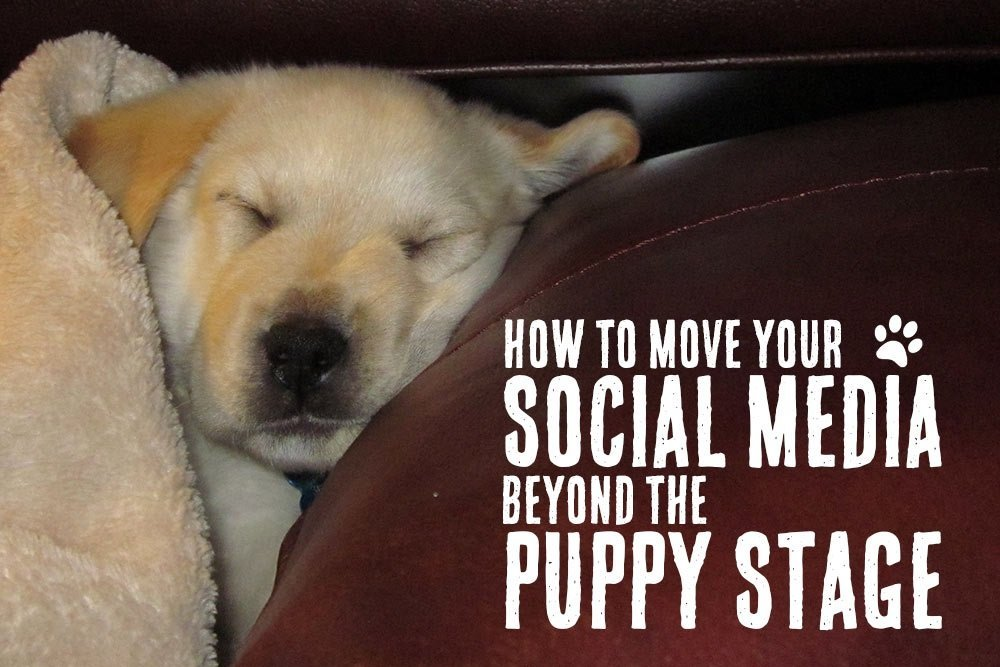 How to Move Your Social Media Strategy Beyond the Puppy Stage