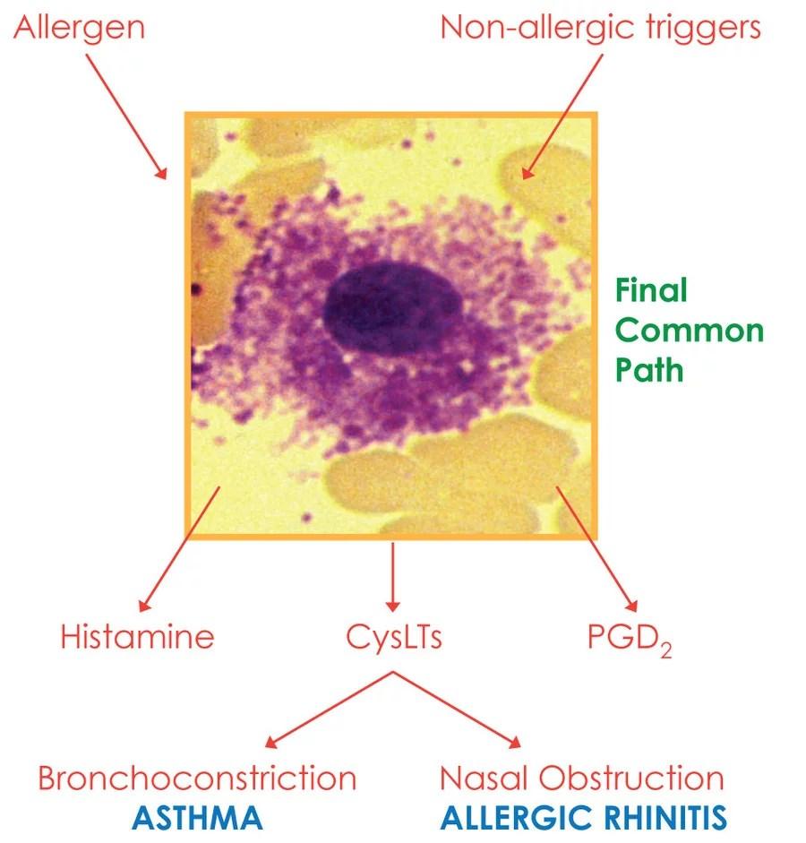 ... nasal treatment allergic spray immunology nasal 28 membrane rhinitis