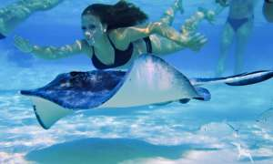 Girl swimming underwater with a stingray on a private boat charter in grand cayman