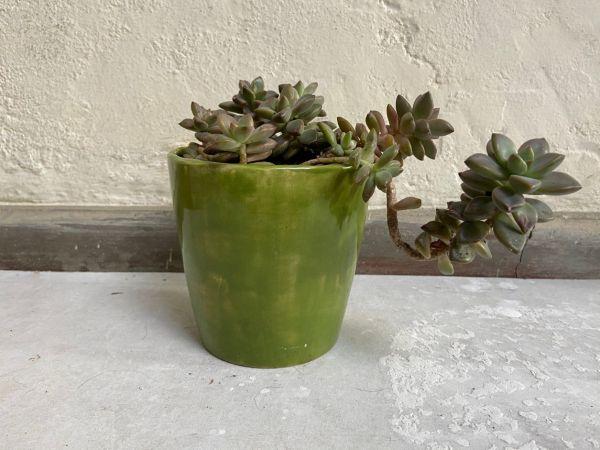 Matera Con Planta Cono. Verde Loro. (M)