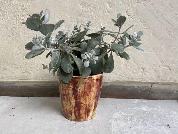 Matera Con Planta Cono. Vinotinto Manchas. (M)