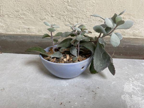 Matera Con Planta Colgante. Lila. (Xs)