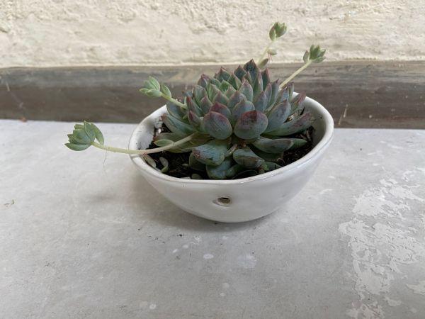 Matera Con Planta Colgante. Blanco. (Xs)