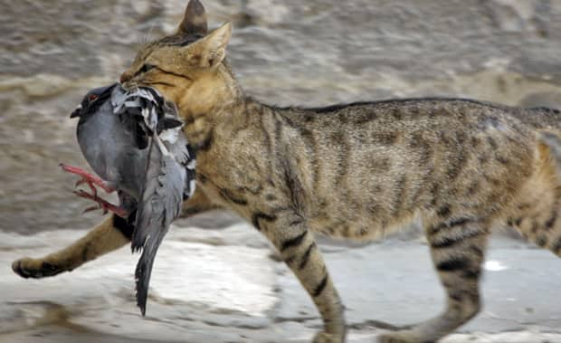 Stray cats are the leading cause of death for birds and mammals, a new report says.