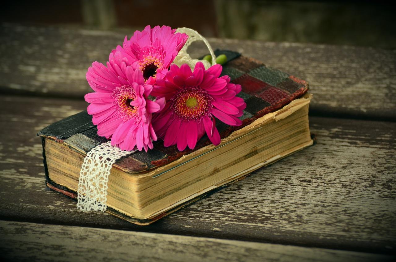 gerbera, pink, flower-1250290.jpg