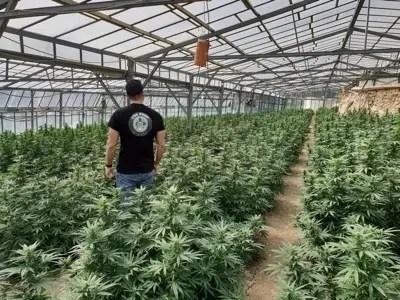 CBD Shop France Culture Cannabis CBD