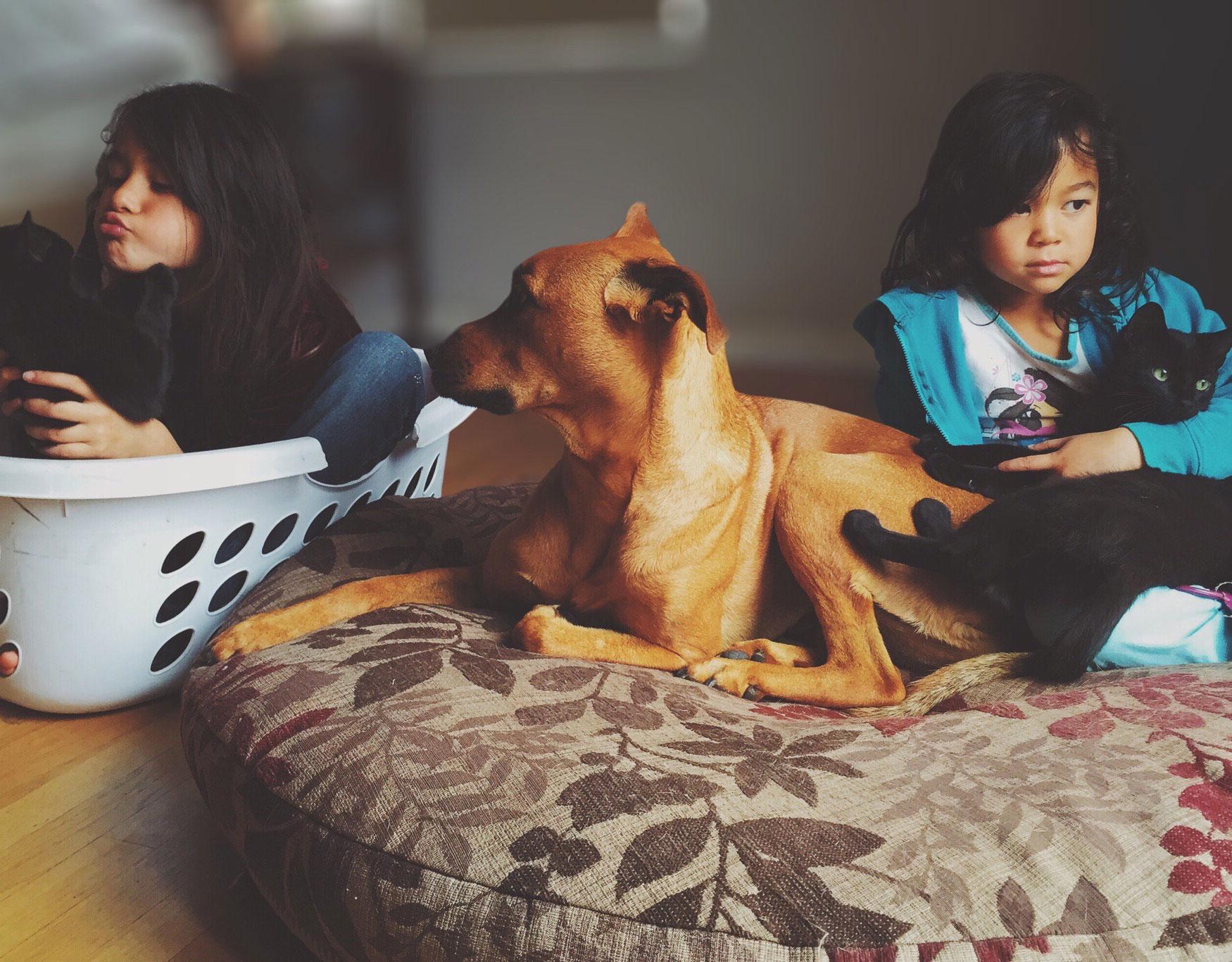 5 Ways CBD Could Help Your Pet