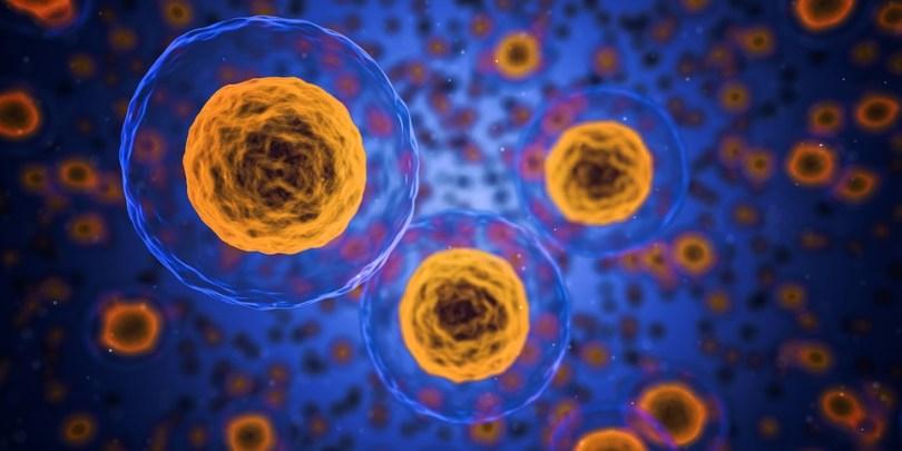 cbd cells