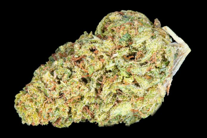 Lemon Drop Hemp Bud