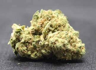 Diesel Hemp Flower. Vaping high-CBD low THC hemp flowers won't cause you to fail a drug test.